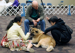 Vision Impaired Girl pets Akita